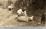 Navajo Man Tending a Sheep