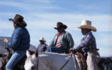 Cattle Drive, Laguna Pueblo, NM