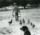 Homesteader Rex Norris feeding chickens - Pie Town 1986