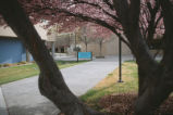 Health Sciences and Services - view through blossoming tree