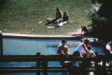 Duck Pond - students enjoying sun on bridge and hill