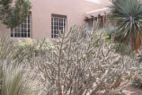 Library - Zimmerman - exterior - yuccas