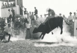 Student Publications - UNM Fiestas - man riding bull