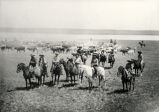 Cowboys and cattle herd, river in background,  New Mexico