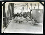 Sheep and cars crossing Rio Grande bridge, New Mexico