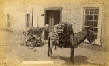 Burros loaded with firewood, Santa Fe, New Mexico