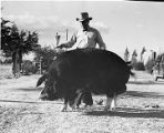 A stock-raiser shows off his prize winning boar, New Mexico State Fair, Albuquerque, New Mexico