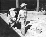 A young 4-H Club member gets his Hereford steer ready for judging, New Mexico State Fair,...