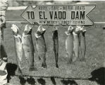 String of trout caught at El Vado reservoir on the Chama River, New Mexico