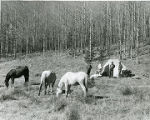Hunting camp in the Sangre de Cristo Mountains, New Mexico