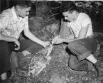 Boy Scouts feeding fawn at the Philmont Scout Ranch near Cimarron, New Mexico