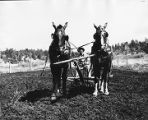 Farmer tilling field in northern New Mexico