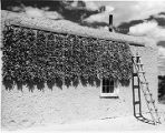 Chili ristras drying on side of home, northern New Mexico