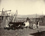 Ox cart, Tesuque Pueblo, New Mexico