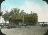 Stacking hay, Roswell, New Mexico