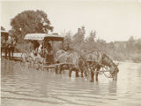 Horses pulling wagon drinking from river, New Mexico
