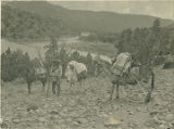 Santiago Naranjo (?) with pack burros and horse, New Mexico
