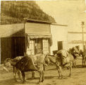 Burros loaded with goods, Ouray, Colorado
