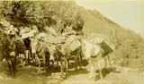 Burro pack train near Aspen, Colorado