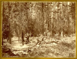 Photo division of Stevenson branch of the Hayden Survey camped at Pierra's Hole near Grand Tetons,...