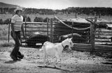 Man tending a goat, New Mexico
