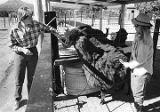 Edna Kennedy and Jackie Sharber care for a brown alpaca at Crystal Mesa Farms, New Mexico