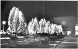 Holiday lights on trees in front of State Capitol, Santa Fe, New Mexico