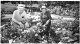 Margaret Johnson, president of Santa Fe Rose Society, and Volney Wesley prune some of the 800...