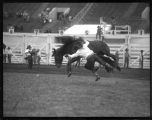 Unidentified cowboy bronc riding