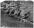 """Cowgirls Tearing Around Soliders' Field on their Mounts"" in a relay race won by Tad..."