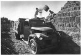 Workers stack hay at Rancho Las Lagunas dairy, Nambe, New Mexico