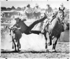 Rodeo contestant Bob Huber wrestles a steer, Santa Fe, New Mexico