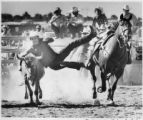 Man wrestles a steer at a rodeo, Santa Fe, New Mexico