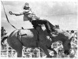 Bareback rider competes in rodeo, Santa Fe, New Mexico