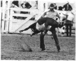 Man ropes a calf at the rodeo, Santa Fe, New Mexico