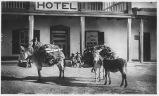 Packing firewood, hotel and burros loaded with wood