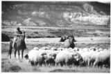 Herder and sheep, Santa Fe, New Mexico