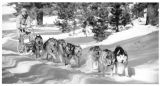 Dave Schultz runs his Siberian Husky sled team in the Jemez Mountains, El Rancho, New Mexico