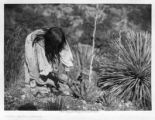 Apache Woman Cutting Mescal