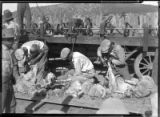 Workers shearing sheep, New Mexico