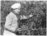 Anthropologist Bertha Dutton in her apple orchard, Santa Fe, New Mexico