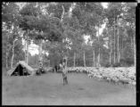 Sheep herders' camp and flock of sheep, New Mexico