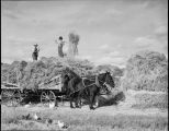Hay cutting, New Mexico