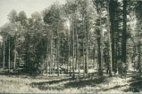 View of woods in Otero County, New Mexico