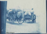 Wagons loaded with bags of wool, Taos, New Mexico