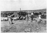 Threshing wheat with goats, New Mexico