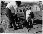 Making adobes at Jemez Pueblo, Sandoval County, New Mexico