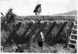 Women plastering adobe at Ed Bewley apartment compound, Llano Quemado, New Mexico
