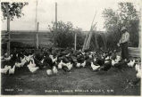 Chickens and turkeys, lower Mesilla Valley, Dona Ana County, New Mexico