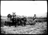 Man with horse drawn hay cutter near Cimarron, New Mexico